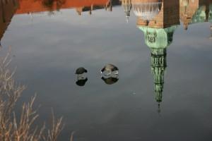 To blishøns på isen. Refleksion ved Frederiksborg Slot